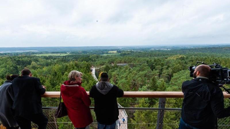 Schon 40 000 Besucher auf Baumwipfelpfad in der Heide