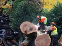 Forest workers cut down trees during a protest in Stuttgart
