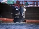Netherlands_Ships_Collide_LON101