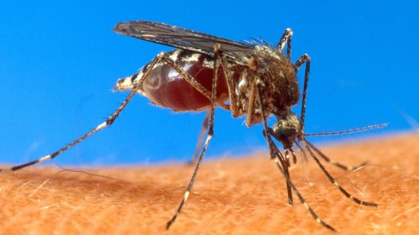Insekten Gentech-Tiere