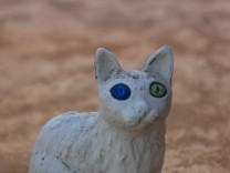 Katze Vankatze