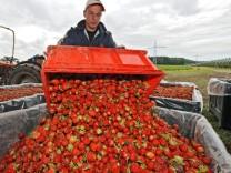 Vom Müll in die Biogas-Anlage: An weggeworfenen Lebensmittel können Firmen gut verdienen, denn aus dem Abfall wird Energie gewonnen.