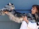 Worlds_Longest_Cat_NVREN901