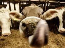 Ein persoenliches Verhaeltnis zur Kuh bringt mehr Milch