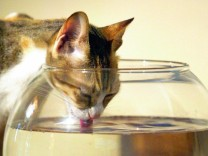 Katzenzungen beim Trinken keine Suppenkellen