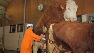 Greifenberg Rinderzucht