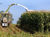 Verfassungsgericht entscheidet über Gentechnik auf Äckern