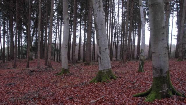 Altstetten Lindacher Forst