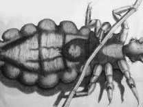 Laus Robert Hooke Royal Society Micrographia