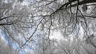 Schnee im Pfälzer Wald