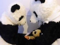 Researchers dressed in panda costumes check the body temperature of a panda cub during its physical examination at the Hetaoping Research and Conservation Center for the Giant Panda in Sichuan province