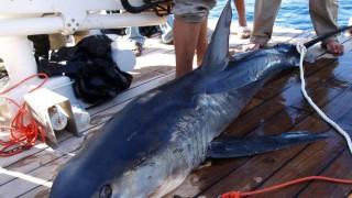 Ägypten Hai-Attacken bei Sharm el-Scheich