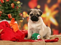 (Service-Bild) Weihnachten im Fressnapf ñ Tierliebe kennt keine Krise