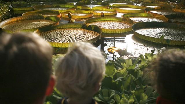 Sonnenbeschienene Seerosen im Botanischen Garten