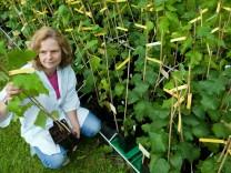 Institut für Forstgenetik und Forstpflanzenzüchtung