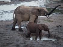 Waldelefant