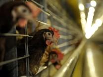 Skandal um dioxinbelastete Lebensmittel weitet sich offenbar aus
