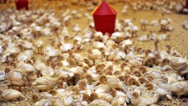 Nach Dioxin-Fund Agrarbetriebe gesperrt