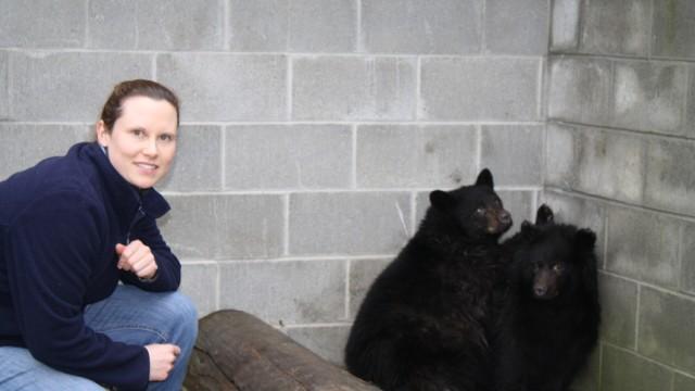 Biologie Kanadische Bären