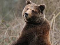 Neue Braunbären im Eifelpark Gondorf