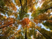 Dem Deutschen Wald geht es besser