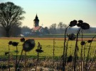 peter.bauersachs_altenerding-sonnenblumen-vertrocknet_20110209090002