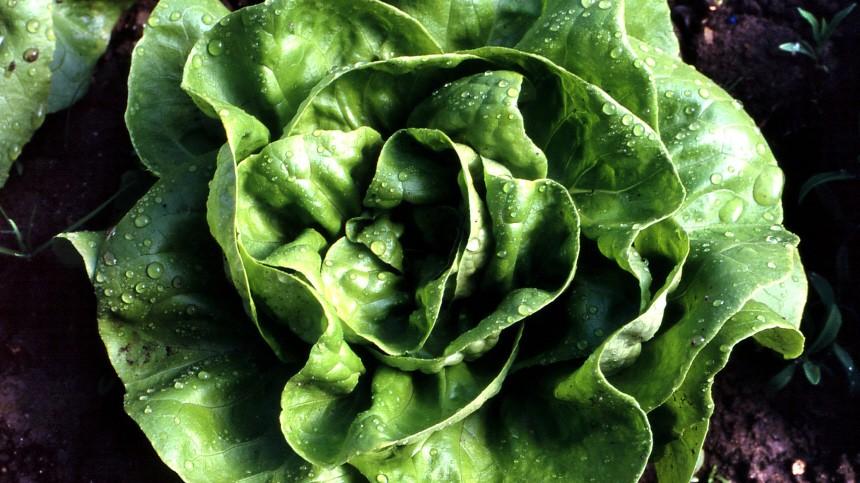 Kinderdienst: Supermarkt-Salat nicht immer gut