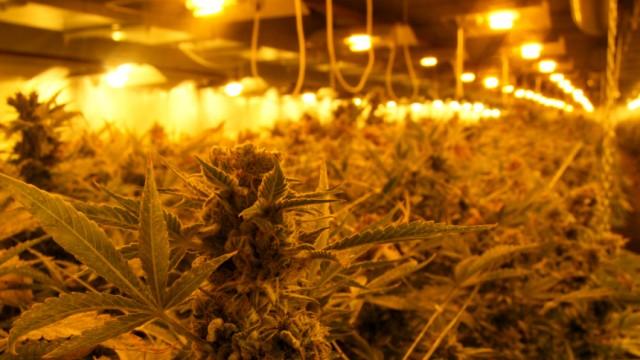 Cannabis Cannabis und Psyche