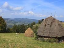 Transylvanien, Rumänien, Ländliches Motiv, Wohnhaus, Herbst, Landschaft, Natur, Kuh, Traditionelle Kultur