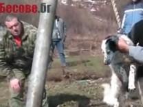 Bulgarien Hundeschleudern Brodilovo