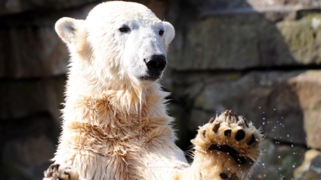Knut wird 4 Jahre alt