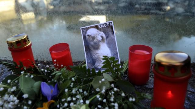 Trauer um den Eisbaeren Knut