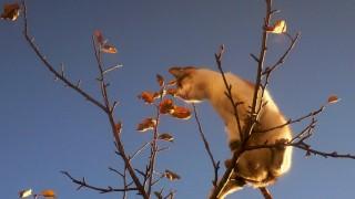 SLOVAKIA-FEATURE-ANIMALS-CAT