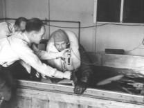 KZ-Ärzte bei Tiefkühlexperimenten, 1942