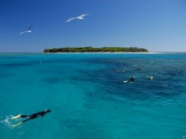 Wo Lady Musgrave niemals war: Tagestour zum Great Barrier Reef