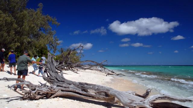 Wo Lady Musgrave niemals war: Tagestour zum Great Barrier Reef