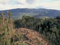 Hoher Goldpreis versechsfacht Regenwaldzerstörung in Peru