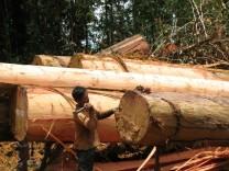 WWF warnt vor dramatischem Waldverlust