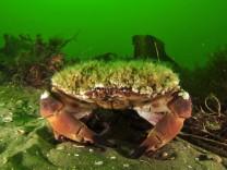 Oceana Unterwasser Expedition in der Ostsee