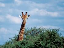 Themendienst Reise: Namibia