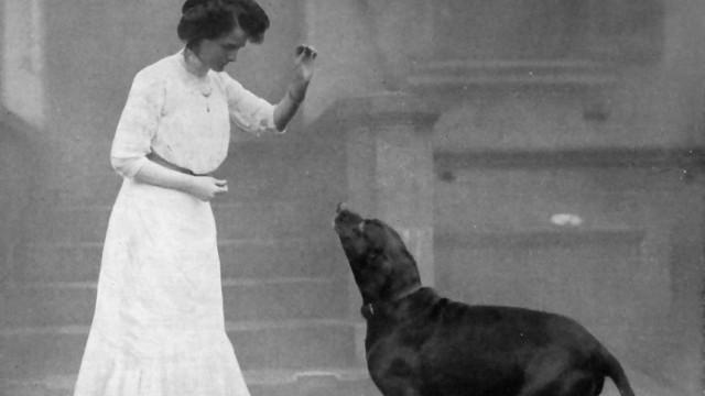 Drittes Reich Drittes Reich: Hundetraining