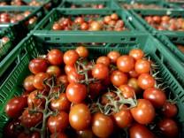 Bauernverband: EHEC bedroht Existenz der Gemuesebauern
