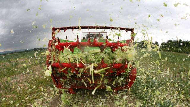 Bauern werfen tonnenweise Gemüse weg