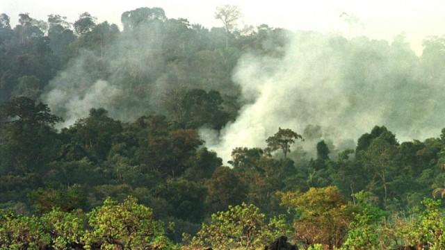 Feuer im Dschungel