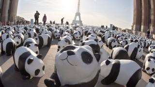 FRANCE-ENVIRONMENT-WWF-PANDAS