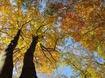 Unesco entscheidet über naturnahe Buchenwälder als Weltkulturerbe