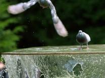 Brunnen im Schlossgarten