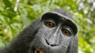 Affe nimmt im Busch Fotograf die Kamera weg und fotografiert damit