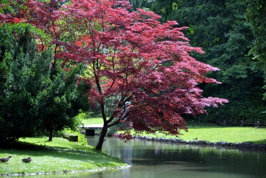 Japanischer Garten München auflösung teil 3 sz sommerrätsel englischer garten am japanischen