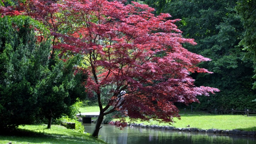 Baume Fur Den Vorgarten Images - Globexusa.us - globexusa.us
